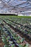 Flower seedlings Stock Photography