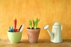 Flower seedlings and gardening tools Stock Photo