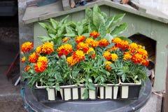 Flower seedlings Stock Photos