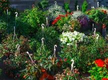 Flower seedlings for sale on the market stock photos