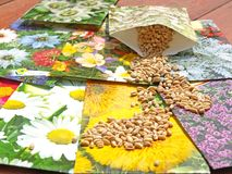 Flower seeds Stock Photos