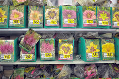 Flower seeds for sale Royalty Free Stock Images