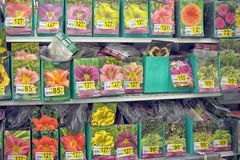 Flower seeds for sale Stock Image