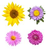 Flower selection Stock Photography
