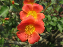 Flower& x27; selfie di s Fotografia Stock