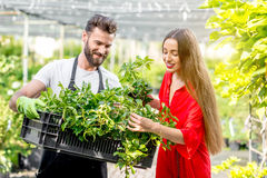 Flower seller with buyer in the shop. Handsome flower seller helping female buyer to choose a flower standing in the plant store. Customer service in the flower stock photos