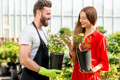 Flower seller with buyer in the shop. Handsome flower seller helping female buyer to choose a flower standing in the plant store. Customer service in the flower royalty free stock images