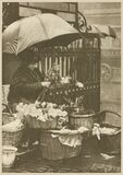 the flower seller is to be observed in her most prosperous state Stock Photography