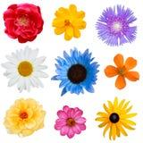 Flower Set Stock Photo