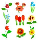 Flower set. Vector illustration of flower set Royalty Free Stock Photo