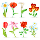 Flower set Royalty Free Stock Photos