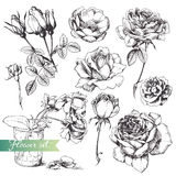 Flower set. Flower set: highly detailed hand drawn roses Stock Images