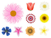 Flower set Stock Image