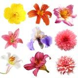 Flower Set Stock Photos