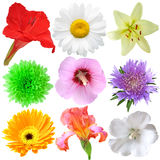 Flower Set Royalty Free Stock Photo