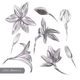 Flower set. Collection of detailed hand drawn flower on an isolated background vector illustration
