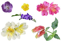 Flower Set. Set of colorful tropical flower isolated on white background Stock Photography