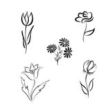 Flower set. Engraved hand drawing floral design elements Differe. Flower set. Engraved hand drawing floral background design elements Different flowers isolated Stock Photo
