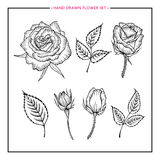 Flower set hand drawn rose. Flower set rose. Hand drawn rose. Rose sketch. Flower rose design for wedding, birthday, greeting card, web, printing, flower shop Stock Images