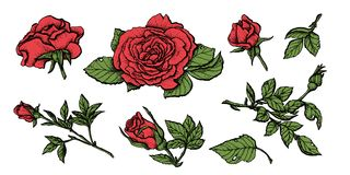 Flower set highly detailed hand drawn roses. Vector illustration Royalty Free Stock Photography