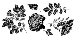 Flower set highly detailed hand drawn roses. Vector illustration Royalty Free Stock Photo