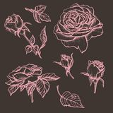 Flower set highly detailed hand drawn roses. Vector illustration Stock Image