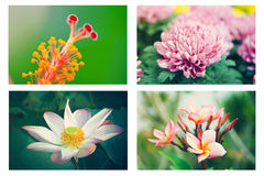 Flower set Stock Images