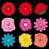 Flower set, part 4 Stock Photos