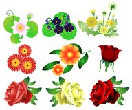 Flower set vector Royalty Free Stock Photo