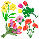 Flower set. Vector illustration Royalty Free Stock Photography