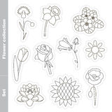 Flower set in vector. Stock Images