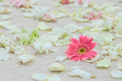 Flower setting. On the beach Stock Photography