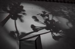 Shadows. Flower Shadows on the wall Royalty Free Stock Image