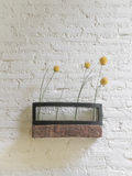 Flower shelf on white brick wall. Stock Image