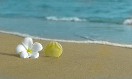 Flower and shell on the beach Royalty Free Stock Image