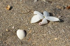 Flower and shell in the sand on the beach Royalty Free Stock Photos