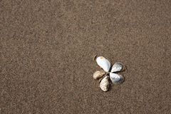 Flower of shells on the sand. View from above stock photos