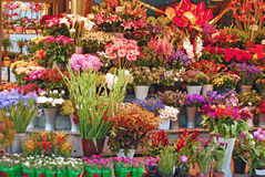Flower shop. Various flowers background at flower shop stock photo