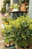Flower shop. In Copenhagen, Denmark stock images