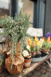 Flower shop Stock Images