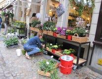 Flower shop in Bruges. A Florist arranging the flowers in a flower shop in Bruges in Belgium Stock Images