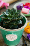 Flower shop - cactus in green pot, colorful ribbons, wrappings Royalty Free Stock Photos
