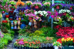 Flower Shop. Colorful Flower in the Shop stock photo