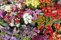 Flower shop. Colorful spring flowers of a florist's Stock Photo