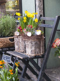 Flower Shop with Daffodils Royalty Free Stock Image