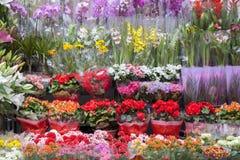 Flower Shop With Full Shelves Stock Image