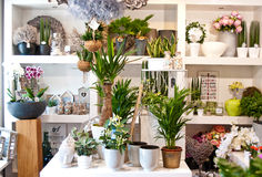 Flower shop interior Royalty Free Stock Images