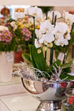 Flower shop interior. Interior of a flower shop with decorations and flowers royalty free stock photos