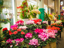 Flower shop in Japan market Stock Photography