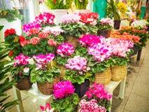Flower shop in Japan market Royalty Free Stock Photos